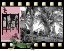 The Night of the Iguana graphic